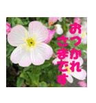 花のスタンプ3(個別スタンプ:18)