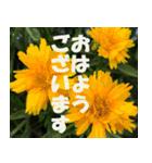 花のスタンプ3(個別スタンプ:19)