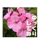 花のスタンプ3(個別スタンプ:20)