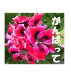 花のスタンプ3(個別スタンプ:21)