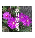 花のスタンプ3(個別スタンプ:22)