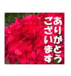 花のスタンプ3(個別スタンプ:23)