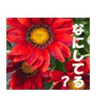 花のスタンプ3(個別スタンプ:24)