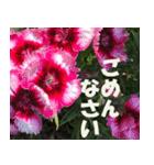 花のスタンプ3(個別スタンプ:25)