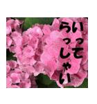 花のスタンプ3(個別スタンプ:26)