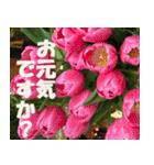 花のスタンプ3(個別スタンプ:27)