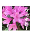 花のスタンプ3(個別スタンプ:28)