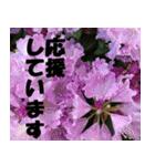 花のスタンプ3(個別スタンプ:29)