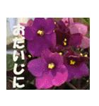 花のスタンプ3(個別スタンプ:30)