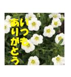 花のスタンプ3(個別スタンプ:31)