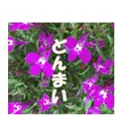 花のスタンプ3(個別スタンプ:32)