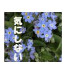 花のスタンプ3(個別スタンプ:33)