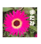花のスタンプ3(個別スタンプ:34)