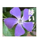 花のスタンプ3(個別スタンプ:35)