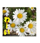 花のスタンプ3(個別スタンプ:36)