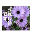 花のスタンプ3(個別スタンプ:37)