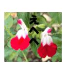 花のスタンプ3(個別スタンプ:38)