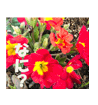 花のスタンプ3(個別スタンプ:39)