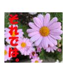 花のスタンプ3(個別スタンプ:40)