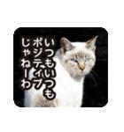 不満げな野良猫たち(個別スタンプ:01)