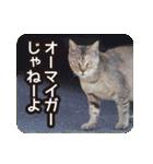 不満げな野良猫たち(個別スタンプ:02)