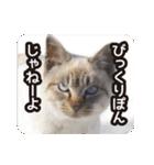 不満げな野良猫たち(個別スタンプ:03)
