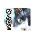 不満げな野良猫たち(個別スタンプ:04)