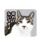 不満げな野良猫たち(個別スタンプ:05)