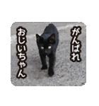 不満げな野良猫たち(個別スタンプ:06)