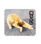 不満げな野良猫たち(個別スタンプ:07)