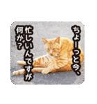 不満げな野良猫たち(個別スタンプ:08)
