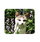 不満げな野良猫たち(個別スタンプ:09)