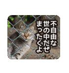 不満げな野良猫たち(個別スタンプ:10)