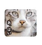 不満げな野良猫たち(個別スタンプ:11)