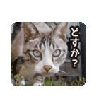 不満げな野良猫たち(個別スタンプ:12)