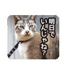 不満げな野良猫たち(個別スタンプ:13)