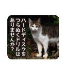 不満げな野良猫たち(個別スタンプ:14)