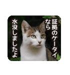 不満げな野良猫たち(個別スタンプ:15)