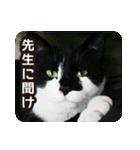 不満げな野良猫たち(個別スタンプ:16)