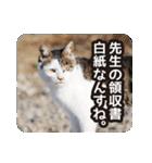 不満げな野良猫たち(個別スタンプ:17)
