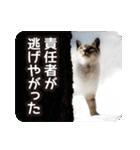 不満げな野良猫たち(個別スタンプ:18)