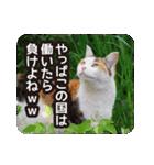 不満げな野良猫たち(個別スタンプ:19)