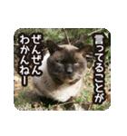 不満げな野良猫たち(個別スタンプ:20)