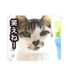 不満げな野良猫たち(個別スタンプ:21)