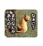 不満げな野良猫たち(個別スタンプ:22)