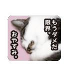 不満げな野良猫たち(個別スタンプ:23)