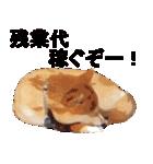しゃべる柴犬(日常会話編1)(個別スタンプ:03)