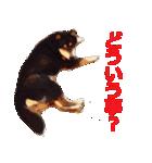しゃべる柴犬(日常会話編1)(個別スタンプ:07)