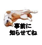 しゃべる柴犬(日常会話編1)(個別スタンプ:14)