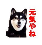 しゃべる柴犬(日常会話編1)(個別スタンプ:17)